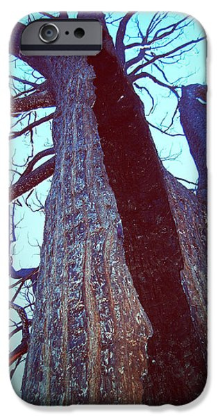 Rural iPhone Cases - Burned Trees 8 iPhone Case by Naxart Studio