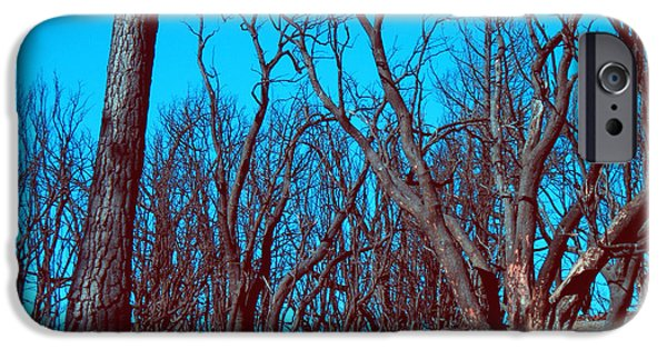 Rural iPhone Cases - Burned Trees and the sky iPhone Case by Naxart Studio