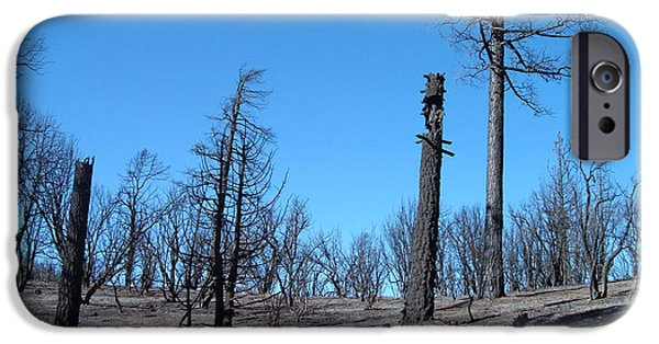 Rural Landscapes iPhone Cases - Burned Trees in California iPhone Case by Naxart Studio