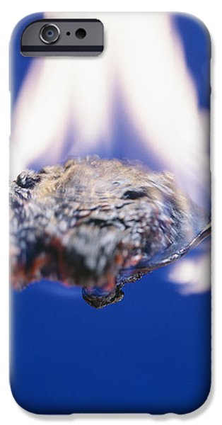 Burning Sugar iPhone Case by Andrew Lambert Photography