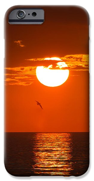 Bird iPhone Cases - Burning Sunset iPhone Case by Andres Leon