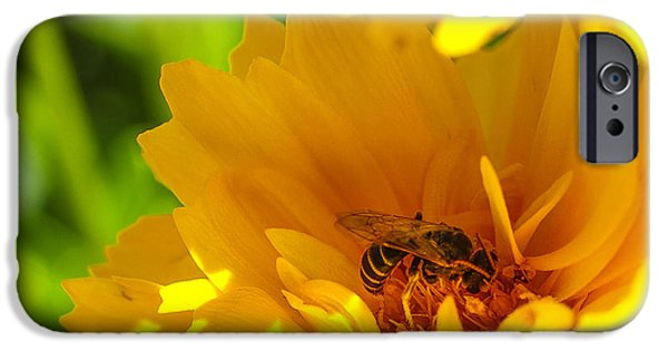 Pollinate iPhone Cases - Busy Bee  iPhone Case by Scott McGuire