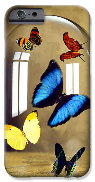 Insect iPhone Cases - Butterflies under glass dome iPhone Case by Tony Cordoza