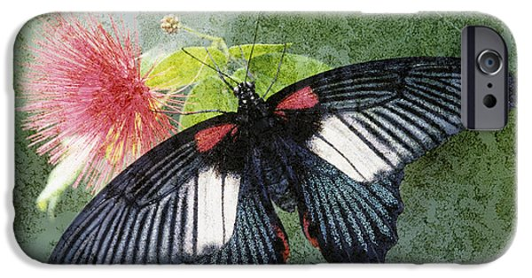 Buterfly iPhone Cases - Butterfly and Silktree - FS000581-a iPhone Case by Daniel Dempster