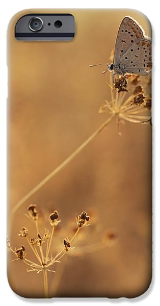 Freedom Pyrography iPhone Cases - Butterfly At Summer iPhone Case by Alon Meir