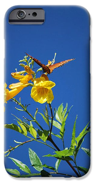 Butterfly in the Sonoran Desert Musuem iPhone Case by Donna Van Vlack