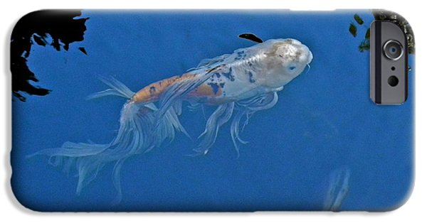 Butterfly Koi Photographs iPhone Cases - Butterfly Koi in Blue Sky Reflection iPhone Case by Kirsten Giving