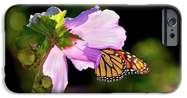 Eating Entomology iPhone Cases - Butterfly Sunset iPhone Case by Betty LaRue