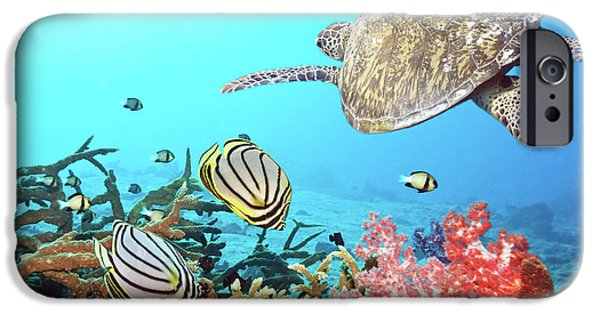 Beach iPhone Cases - Butterflyfishes and turtle iPhone Case by MotHaiBaPhoto Prints