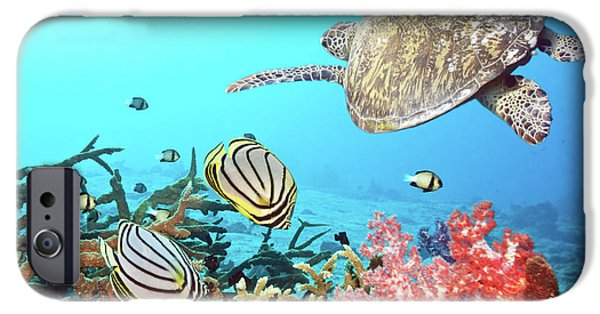 Animal Photographs iPhone Cases - Butterflyfishes and turtle iPhone Case by MotHaiBaPhoto Prints
