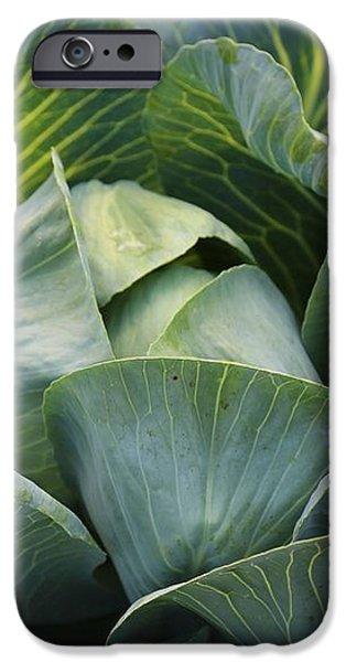 Cabbage in the Vegetable Garden iPhone Case by Carol Groenen
