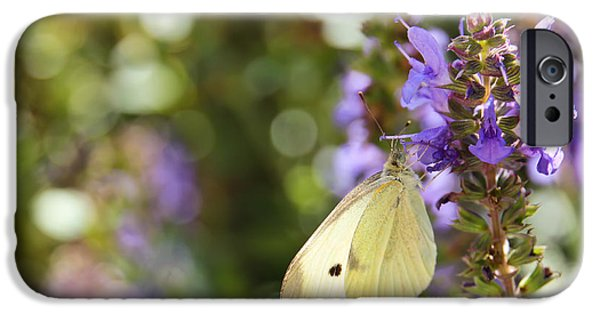 Cabbage White Butterfly iPhone Cases - Cabbage White Butterfly iPhone Case by Heidi Smith