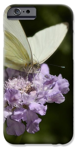 Cabbage White Butterfly iPhone Cases - Cabbage White Butterfly  iPhone Case by Saija  Lehtonen