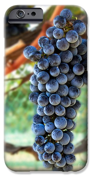 Cabernet Sauvignon iPhone Case by Robert Bales