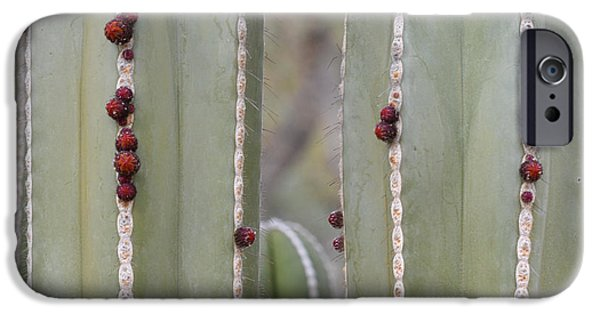 Arizonia iPhone Cases - Cactus Buds iPhone Case by Rebecca Margraf