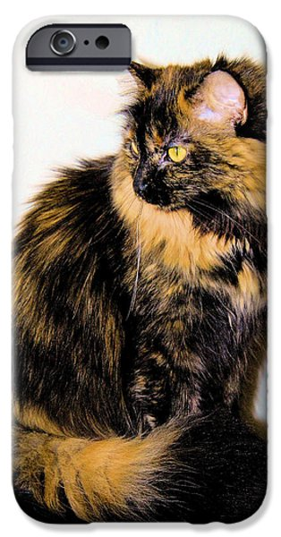 Calico Cats iPhone Case by Cheryl Poland