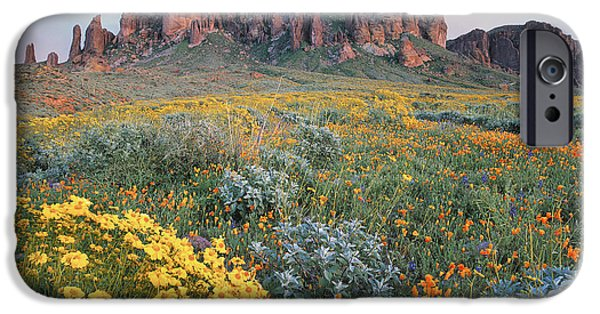 Mountains iPhone Cases - California Brittlebush Lost Dutchman iPhone Case by Tim Fitzharris