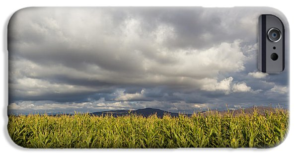 Temecula iPhone Cases - California Cornfield iPhone Case by Heidi Smith