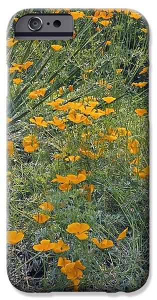 Californian Poppy (eschscholzia Sp.) iPhone Case by Dr Keith Wheeler