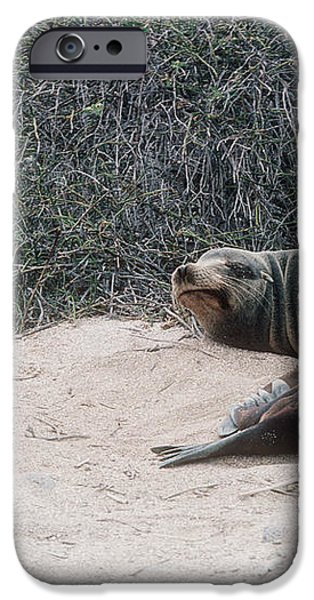 Californian Sea Lion With A Tourist iPhone Case by Georgette Douwma