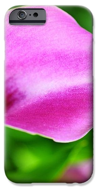 Calla Lilly iPhone Case by Kathleen Struckle