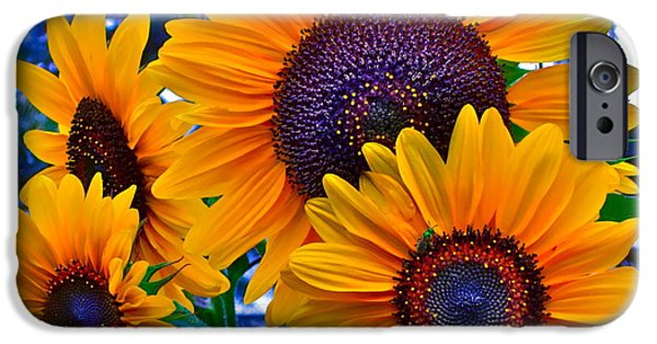 Sunflower Photograph iPhone Cases - Callies Crew iPhone Case by Gwyn Newcombe