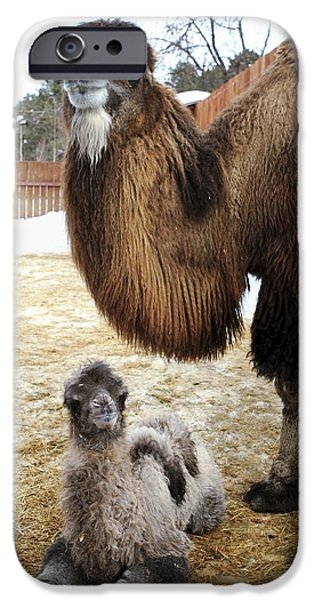 Camel And Colt iPhone Case by Ria Novosti