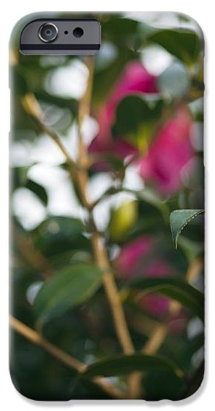 Camellia Flower (camelia Japonica) iPhone Case by Dr Keith Wheeler