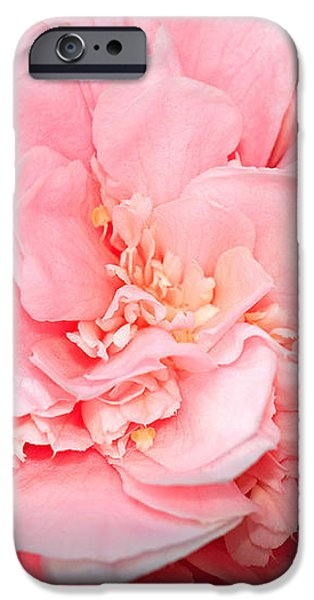 Camellia iPhone Case by Louise Heusinkveld