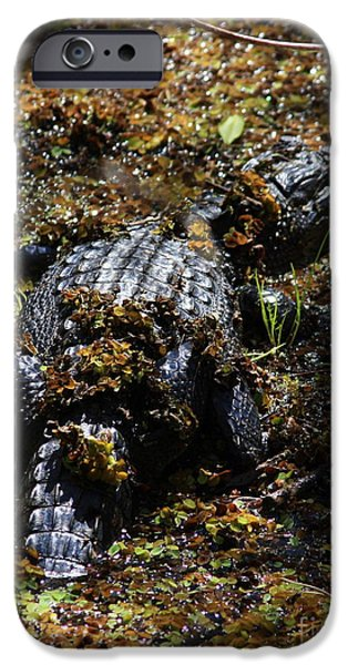 Alligator iPhone Cases - Camouflage iPhone Case by Carol Groenen