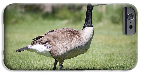 Wildlife Photographer iPhone Cases - Canada Good Close Up iPhone Case by Cindy Singleton