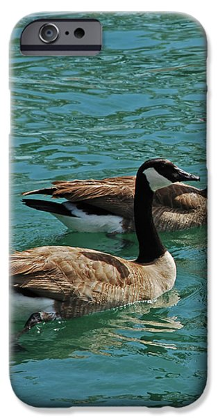 Canadian Geese iPhone Case by Carol  Eliassen