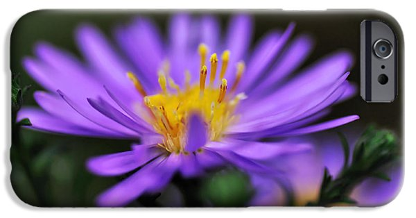 Daisy Bud iPhone Cases - Candles on a Daisy iPhone Case by Kaye Menner