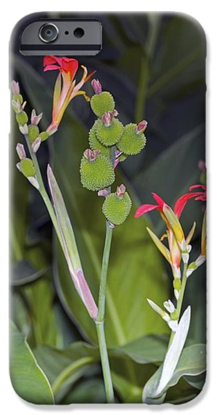 Canna iPhone Cases - Canna Brasiliensis iPhone Case by Dr Keith Wheeler