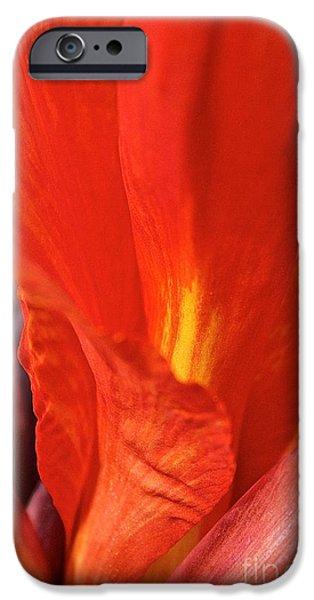 Canna Closeup iPhone Case by Susan Herber