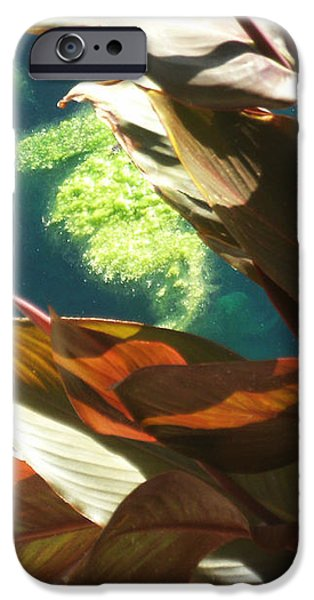 Canna Lily and Water in San Angelo Civic League Park iPhone Case by Louis Nugent