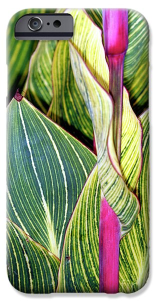 Canna Lily Foliage iPhone Case by Dr Keith Wheeler