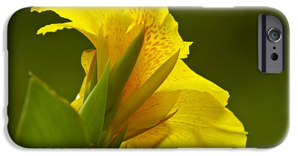 Canna iPhone Cases - Canna Lily iPhone Case by Heiko Koehrer-Wagner
