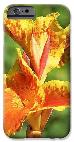 Canna Lily iPhone Case by Kenneth Albin