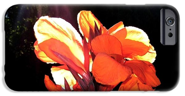 Canna iPhone Cases - Canna Lily iPhone Case by Will Borden