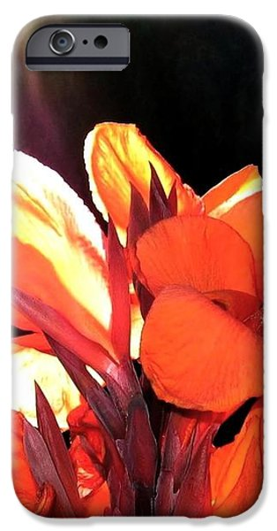 Canna Lily iPhone Case by Will Borden