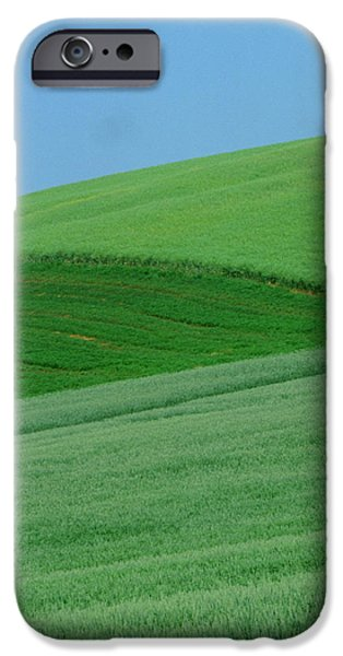 Canola Field iPhone Cases - Canola Field, Bruxelles, Manitoba iPhone Case by Mike Grandmailson