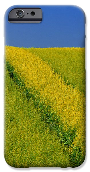 Canola Field iPhone Cases - Canola Field, Darlington, Prince Edward iPhone Case by John Sylvester