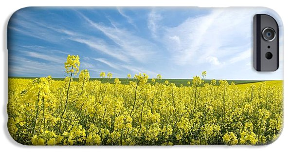 Canola iPhone Cases - Canola Field iPhone Case by Peter Chadwick