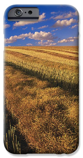 Canola Field iPhone Cases - Canola Field, Tiger Hills, Manitoba iPhone Case by Dave Reede