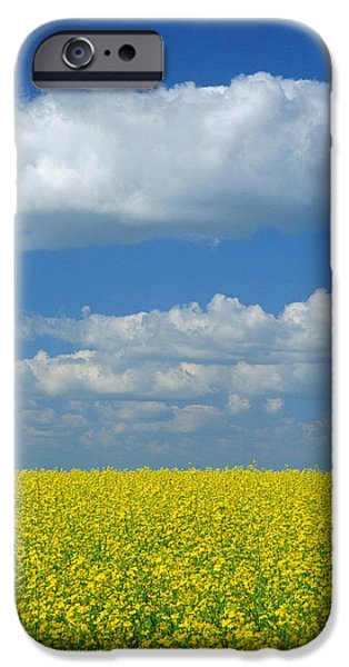 Canola Field iPhone Cases - Canola Field, Treherne, Manitoba iPhone Case by Mike Grandmailson