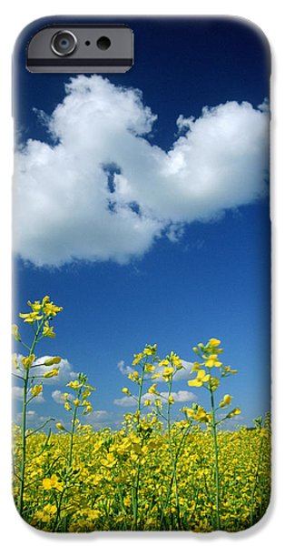 Canola Field iPhone Cases - Canola Flowers, Marquette, Manitoba iPhone Case by Mike Grandmailson
