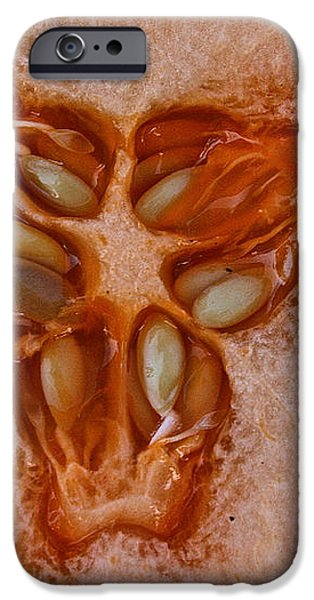 Cantaloupe Core iPhone Case by Susan Herber