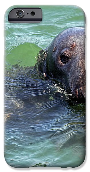 Cape Cod Harbor Seal iPhone Case by Juergen Roth