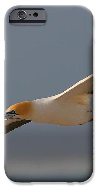 Cape Gannet In Flight iPhone Case by Bruce J Robinson